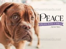 Peace Begins With A Smile Inspirational Quote Graphic