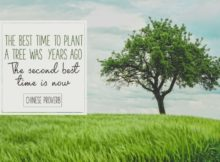 Best Time To Plant A Tree by Chinese Proverb